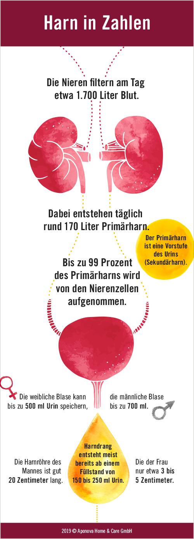 Infografik über die Funktion von Niere und Blase